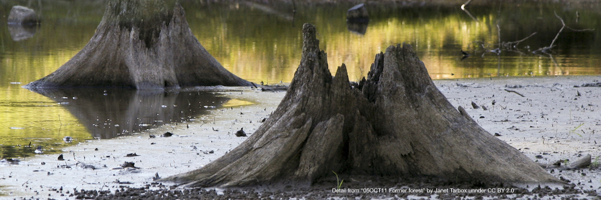 low water levels expose tree stumps near Edgefield, SC